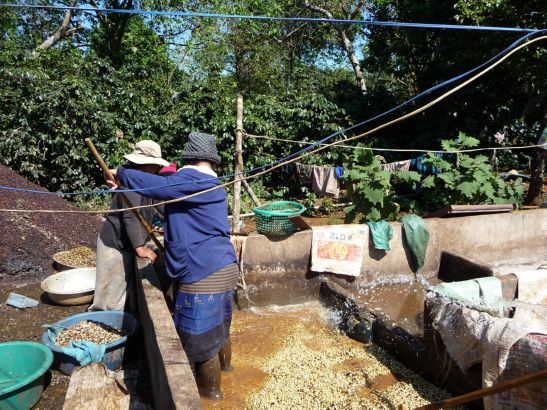 Laos Reise, LLT003, 12, Kaffeeverarbeitung