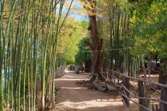 Laos Reisen Foto Don Koh Island 11